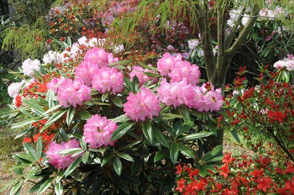 石川植物園