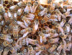 下川養蜂場
