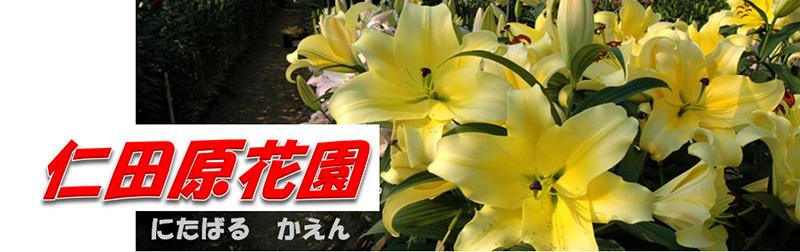 仁田原花園