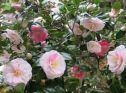 四季を感じさせる花が咲きます