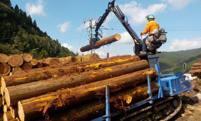 未来の森を育てる仕事(株式会社足達木材)