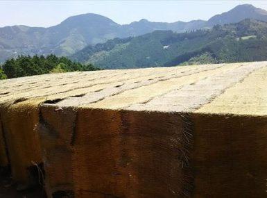 八女東部製茶工場